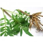 Valerian Root 150x150 Ayurveda for Insomnia: Ayurvedic Herbs for Treating Insomnia