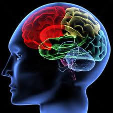healthy brain Healthy Brain Tips