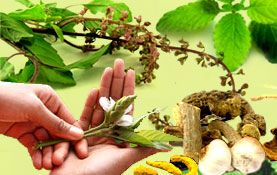 Herbs for Anxiety Treatment