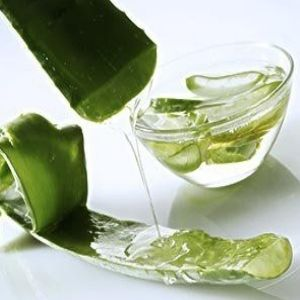 aloe vera1 Chicken Pox Scars: Home Remedies to Remove Chicken Pox Dent