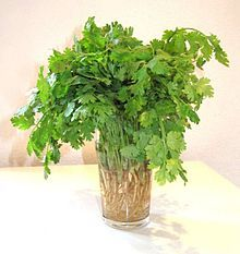Coriander leaves Natural ways to enhance Immune System