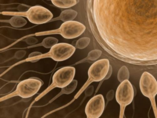 Male infertility symptoms and cause
