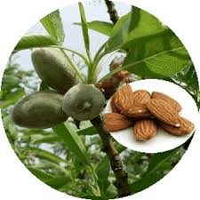 Almonds for All Round Good Health