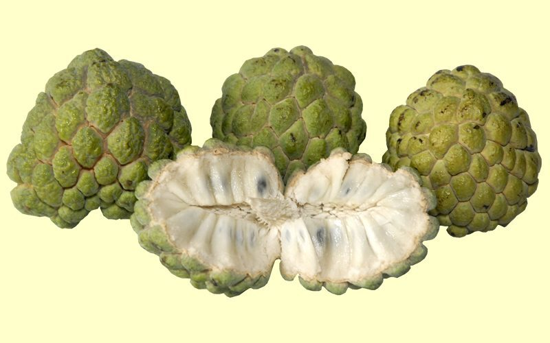 Custard Apple for Tuberculosis